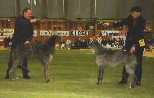 Ch Baylind Edgar and Ch Art Doc Aramita winning BOB and BOS at NKK's international show in Bø